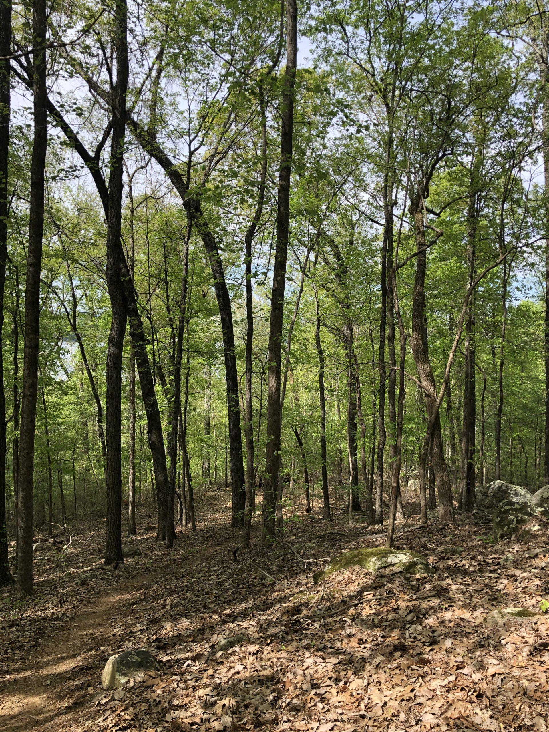 Lodge Trail at Lake Guntersville Isaiah 61:11