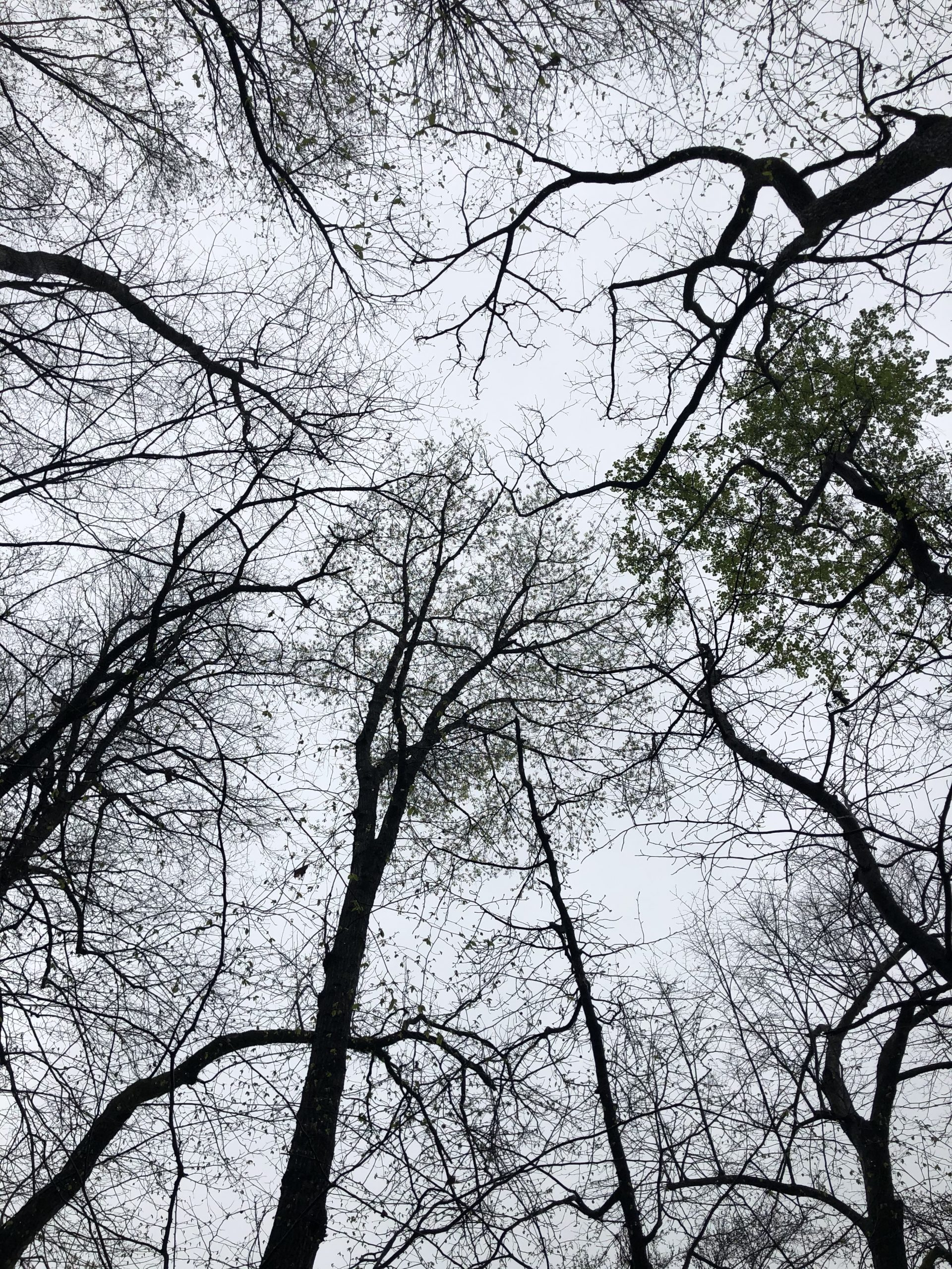 Looking Up through the Trees Psalm 141 at Lake Guntersville