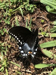 Butterfly Resting at Lake Guntersville Trail