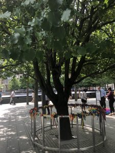 Survivor Tree Promises A Future